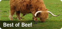 Best of Beef